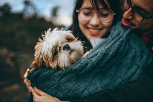 Puppy love: Choosing the perfect pooch poses challenges similar to dating